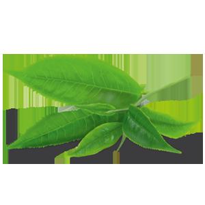 Té verde - Sencha
