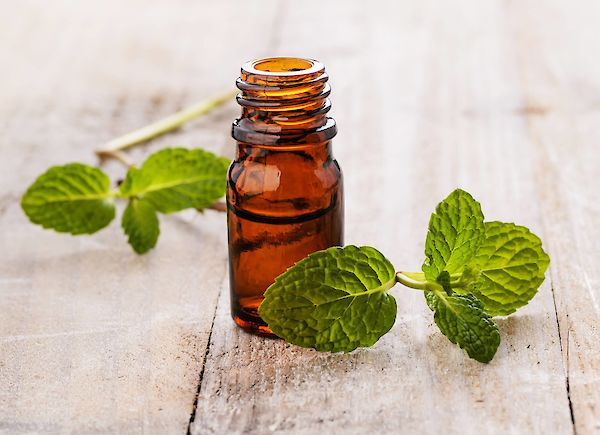 Essential mint oil: the refreshing all-rounder of the aromatherapy world